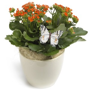 plant-in-pot